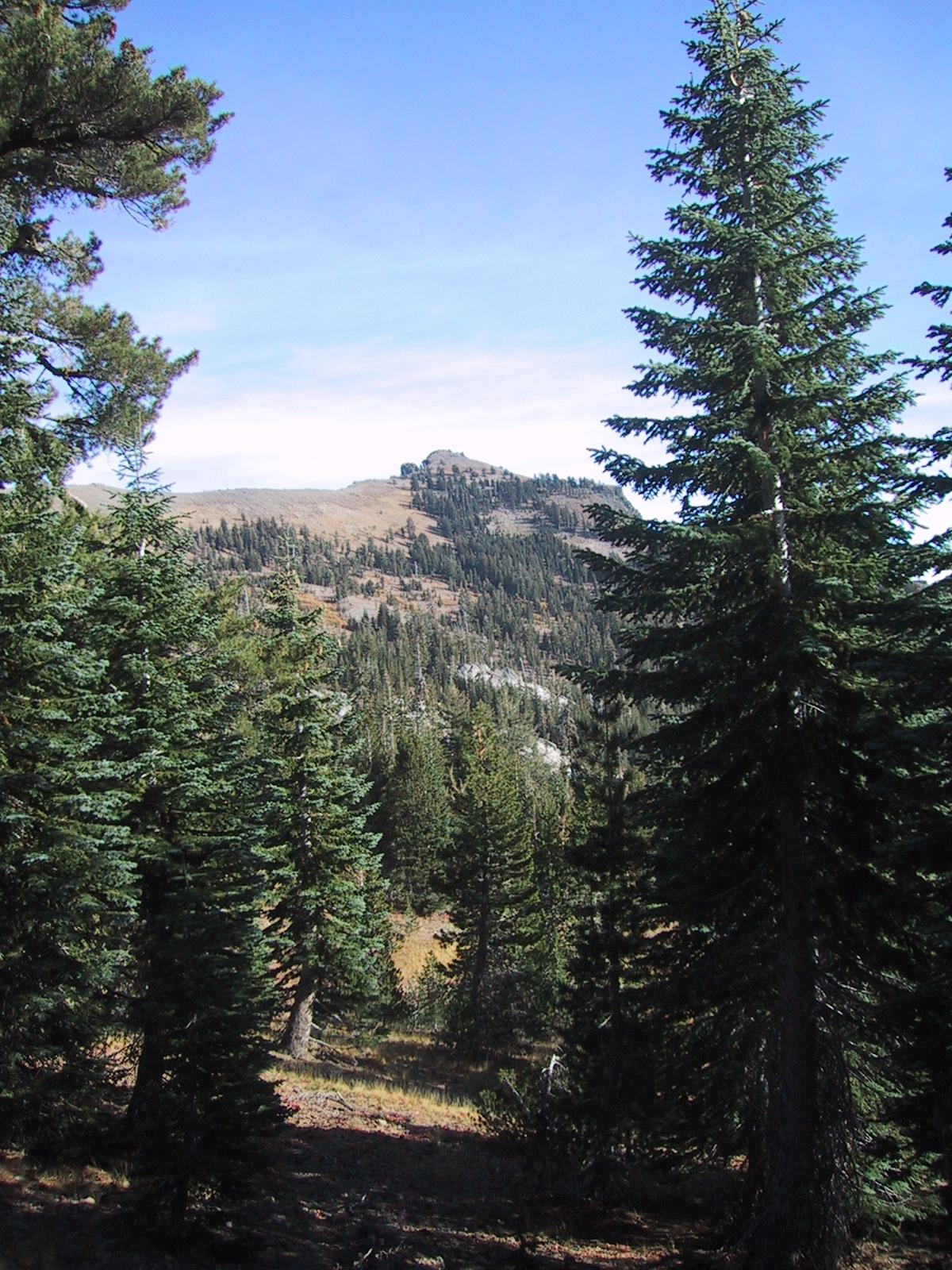 [Castle Peak with trees in foreground]
